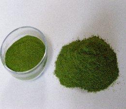 KBHoldings축령산 편백나무 잎 분말