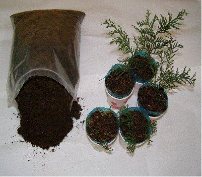 KBHoldings축령산 편백나무 씨앗기르기 부자재 고운 부식토